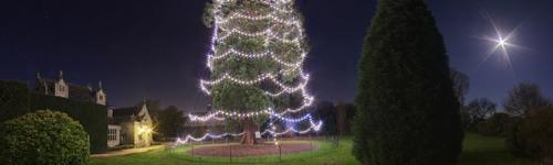 Wakehurst House Christmas Tree, Sussex